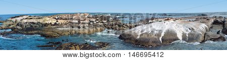 Seal Island, Hout Bay, Cape Town South Africa 01