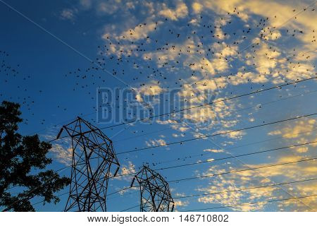 Birds on electrical wires sunset sky Many Birds on a wire