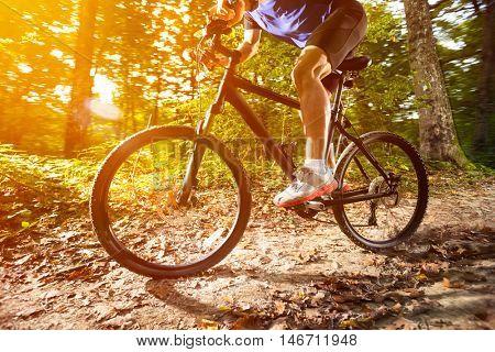 Forest mountain biking