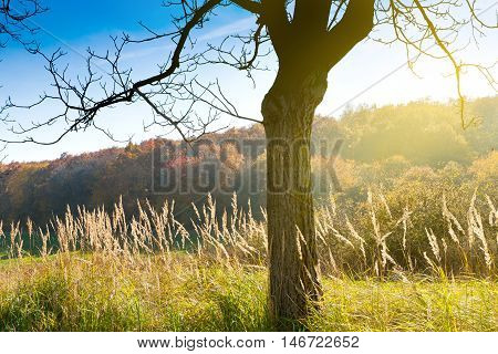silhouette of the tree, autumnal landscape, Czech Karst, Czech Republic