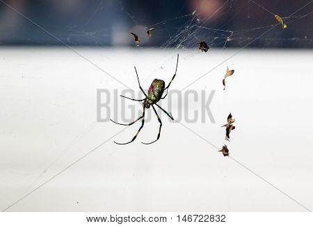 close up of spider on spider web (cobweb)