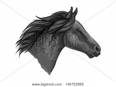 Black stallion horse head sketch with purebred racehorse of arabian breed. Horse racing badge, equestrian sporting competition symbol or t-shirt print design