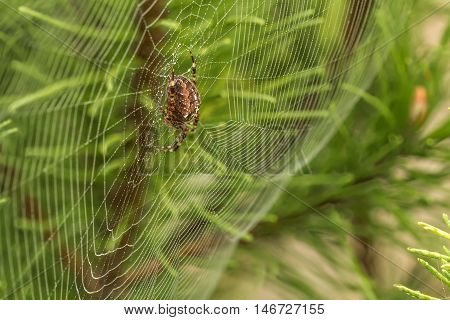 Large Spider In The Middle