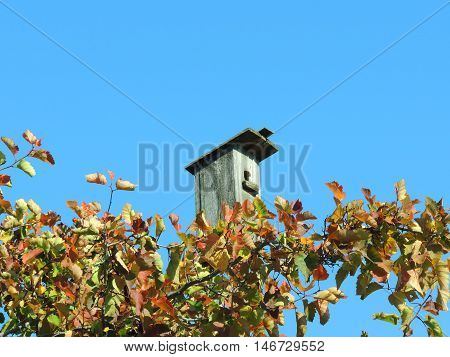 Empty birdhouse in late autumn on a background of blue sky and yellow leaves on the tree.