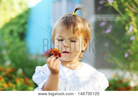 Little girl with ponytail looking at marigold flower