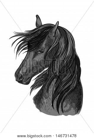 Sketched horse head of black purebred arabian stallion horse. Equestrian sport symbol, riding club badge or horse racing design