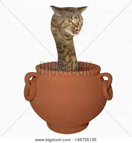 A cat looks like a hairy snake. This strange reptile sits in a pot. White background.