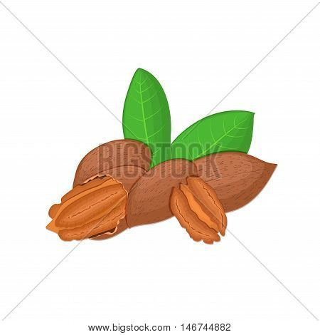 Vector illustration of a pecan nut. A handful of Appetizing pecan nut with yellow flower, red and yellow nuts and leaves on a white background. Elements of packaging design brochures on healthy eating