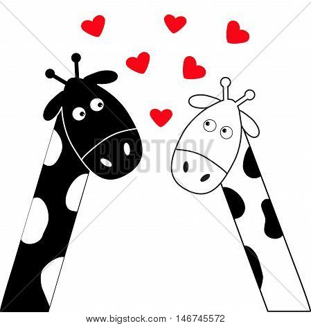 Cute cartoon black white giraffe boy and girl. Camelopard couple on date. Long neck. Funny character set. Happy family. Love greeting card with hearts. Flat design. Heart background. Isolated. Vector