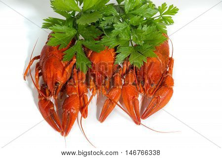 macro three Boiled crayfish on isolate white background with green