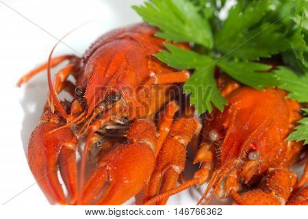 macor two Boiled crayfishs on isolate white background with green