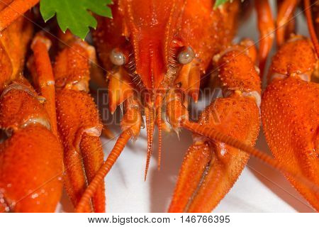 maco Boiled crayfish on isolate white background with green