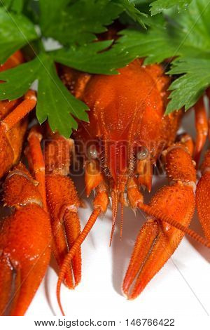 macor Boiled crayfish on isolate white background with green