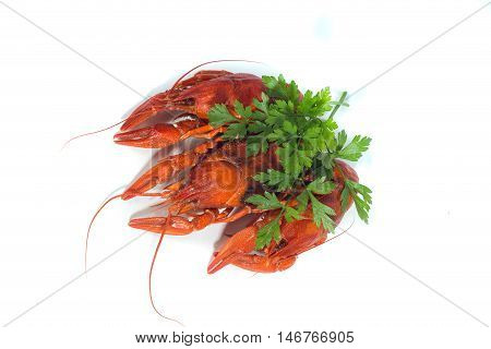 macro three Boiled crayfishs on isolate white background with green
