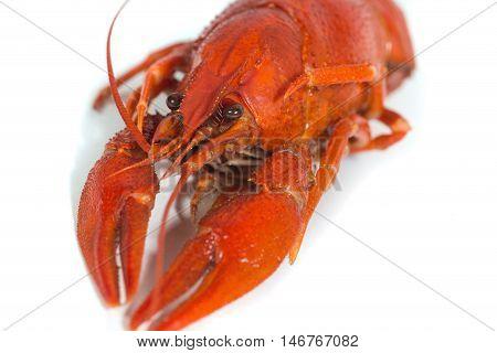macro Boiled crayfish on isolate white background