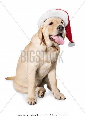 Labrador Retriever in Santa hat - isolated image
