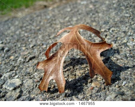 Last Autumn Leaf