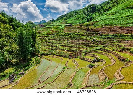 Rice field terraces (rice paddy). Near Cat Cat village, near Sapa, VIetnam