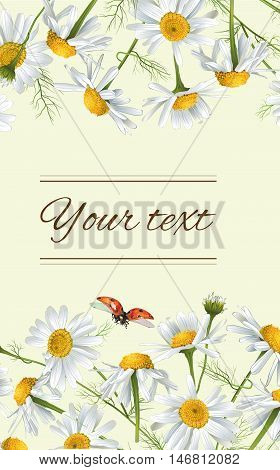 Vector chamomile flowers vertical banner. Design for tea, natural cosmetics, beauty store, organic health care products, perfume, essential oil, homeopathy, aromatherapy. With place for text