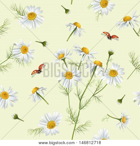 Vector chamomile flower seamless pattern with ladybug. Design for herbal tea, natural cosmetics, health care products, aromatherapy, homeopathy. Best for print, wrapping paper