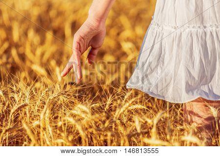 Man's hand slide threw the golden wheat field