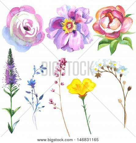 Painted wildflower flowers set in a watercolor style. Set includes isolated herbs: meadow, daisy, calla and waxflower.