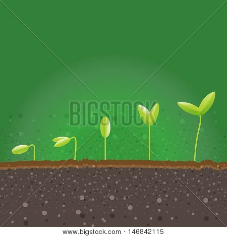 Step Of Plants Grow Up In Eco Natural