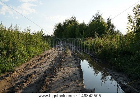 tree,  footpath, wet, mud, dirt, road, russia,  dirty, messy,   autumn, years,