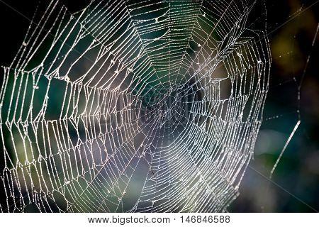 nice spider web in dew