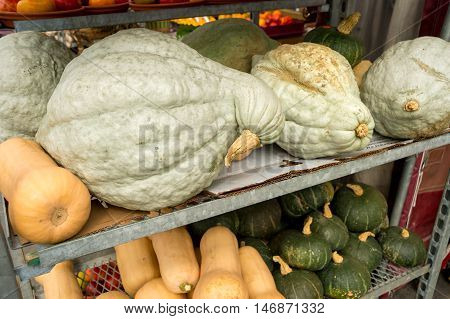Butternut, Kabocha And Hubbard Squashes At The Local Market In Autumn