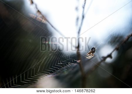 small spider (Metellina segmentata) in a big net in the forest backlit macro shot selected focus and narrow depth of field