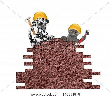 dog and cat builders holding tools in their paws -- isolated on white