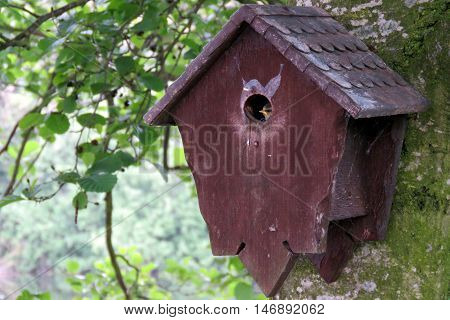 Baby blue tit peeping out of the nest box