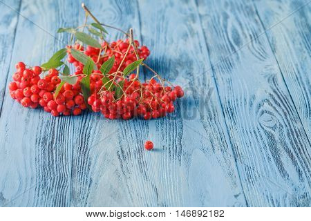 Rowan Berries On A Blue Background. Place For Text