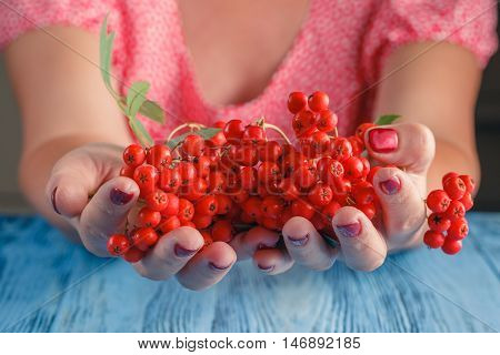 Woman Offer Rowan Berries On Vintage Wooden Boards