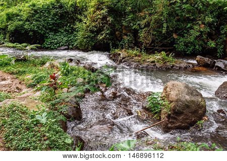 Fast tropical river with tropical jungle forest trees on one side, Bali nature, Indonesia