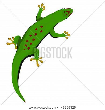 Madagascar day gecko vector illustration. Green tropical lizard on white background.