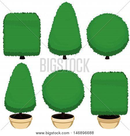 Decorative Topiary Bushes Illustration.