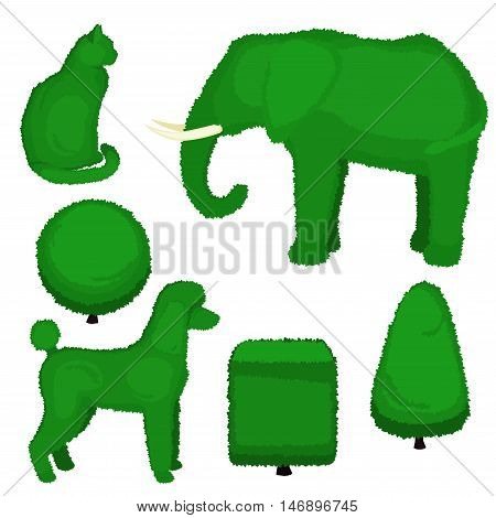 Set of topiary bushes of different shapes. Vector illustration of a elephant poodle cat pyramid sphere and cube topiary isolated on white background.