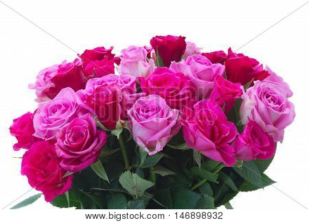 bunch of fresh pink and magenta roses closeup isolated on white background