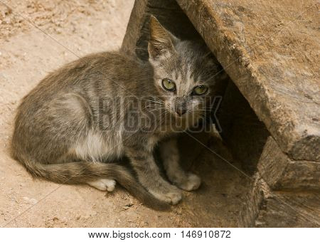 Gray tiger cat finds shelter in a wooden box