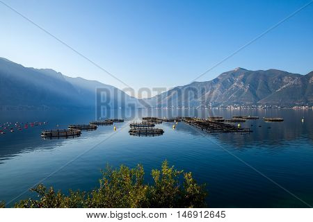 Cage farming agriculture, fish farming cage systems in Kotor Bay in Montenegro