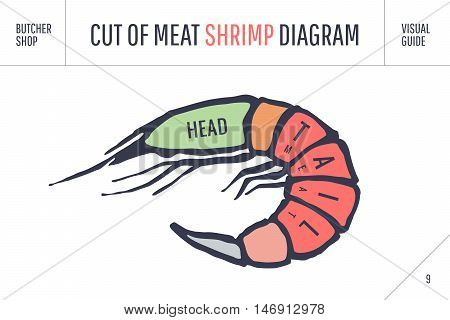 Cut of meat set. Poster Butcher diagram and scheme - Shrimp. Colorful vintage typographic hand-drawn visual guide for butcher shop. Vector illustration