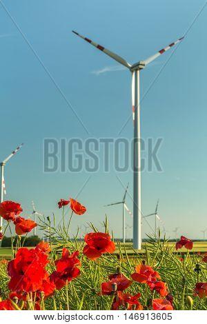 wind turbine farm with poppy flowers in foreground