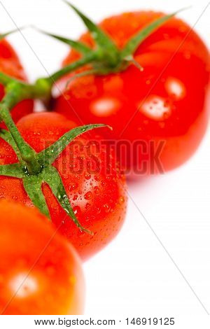 Red Tomatoes on the Vine on white background. Selective focus.