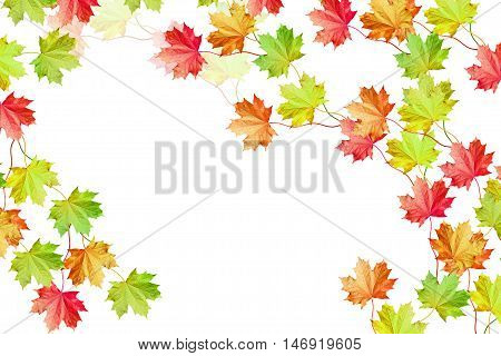 foliage isolated on white background. Golden autumn