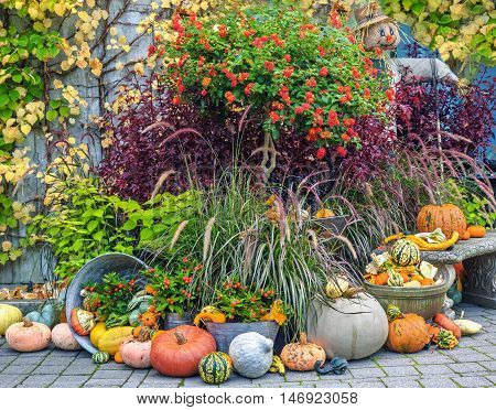 Fall produce arranged on a display during Thanksgiving season