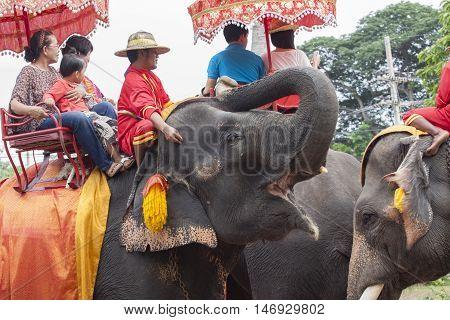 AYUTHAYA THAILAND-SEPTEMBER 6 : tourist riding on elephant in Ayuthaya famous world heritage sites of unesco central of thailand on september 62014 in Ayuthaya Thailand