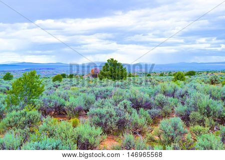 Sage Plants amongst Juniper Trees taken on the high elevation mesa in Northern New Mexico