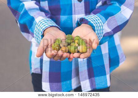 Acorns in the hands of a little boy. Children's tenderness